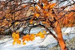 第一雪在秋天公园。 库存照片