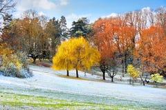 第一雪在秋天公园。 库存图片
