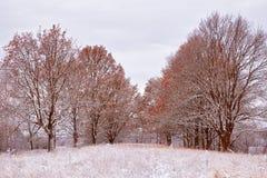 第一雪在秋天公园 在树的秋天颜色 秋天 免版税库存图片