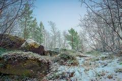 第一雪在秋天森林里 库存图片