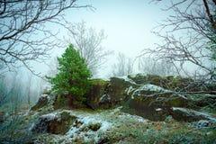 第一雪在秋天森林里 免版税库存照片