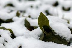 第一雪在10月 库存照片