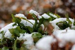 第一雪在10月 免版税库存照片