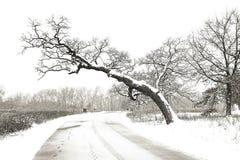第一雪天在公园 免版税库存图片