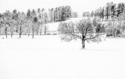第一雪的秀丽 库存图片