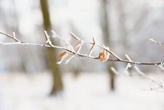 第一雪盖了山毛榉树失去的叶子  山毛榉森林 免版税库存照片