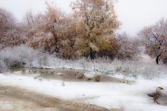 第一雪,俄罗斯的远东的水坑/鹅/自然 图库摄影