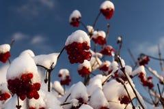 第一雪 免版税库存照片