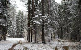 第一雪 免版税库存图片