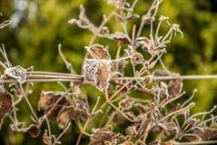 第一霜和雪在叶子- 6 图库摄影