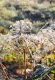 第一霜在秋天公园 早晨在11月 免版税库存照片