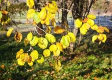 第一霜在秋天公园 早晨在11月 库存图片