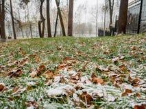 第一滴下的雪盖了一片绿草和黄色下落的叶子 库存照片