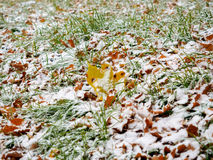 第一滴下的雪盖了一片绿草和黄色下落的叶子 免版税库存图片