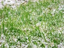 第一滴下的雪盖了一片绿草和黄色下落的叶子 库存图片