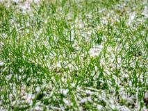第一滴下的雪盖了一片绿草和黄色下落的叶子 免版税图库摄影