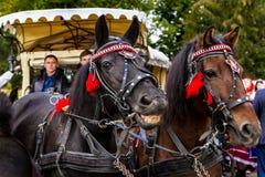 第二个种族节日Bobovischenske Grono在Zaka举行了 库存图片