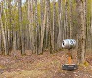 第八个孔在skagway的一个森林 免版税库存照片