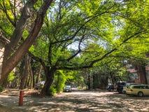 第比利斯,乔治亚- - 2018年5月17日:房子,开花树,汽车的围场在围场 春天在城市 免版税库存图片