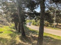 第比利斯,乔治亚- - 2018年5月17日:路的宏伟的视图,杉树,在路的汽车 春天在城市 库存照片