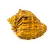 第15个2009年背景查出照片海运9月壳被采取的白色 免版税库存照片