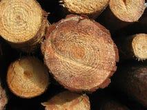 第3木头 免版税图库摄影