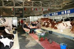 第65个牛牛奶店公平的国际贸易 库存图片