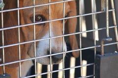 笼中的狗 库存照片