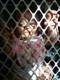 笼中的秀丽 库存照片