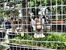 笼中的笑的菩萨 库存照片