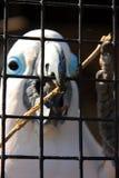 笼中的美冠鹦鹉 免版税库存图片