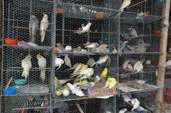 笼中的鸟 免版税库存图片