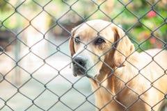 笼子或格栅和狗 库存照片