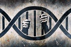 笼子脱氧核糖核酸监禁了 免版税库存图片