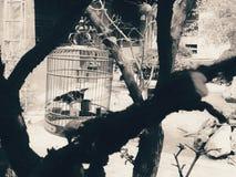 笼子鸟在一个小庭院里 库存照片