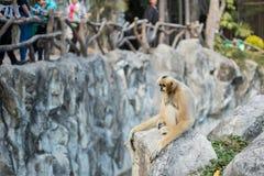 笼子猴子 库存图片