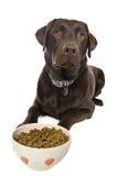 等候狗食他的 免版税图库摄影