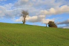 等待冬天的树 库存图片