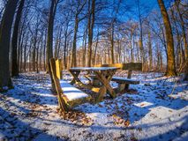 等待和休息在雪森林里 库存照片