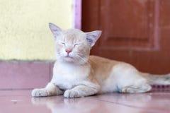 等待和坐在门前面的一只逗人喜爱的矮小的公猫 库存图片