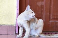 等待和坐在门前面的一只逗人喜爱的矮小的公猫 库存照片