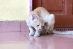 等待和坐在门前面的一只逗人喜爱的矮小的公猫 免版税图库摄影