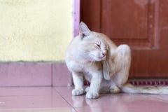 等待和坐在门前面的一只逗人喜爱的矮小的公猫 免版税库存照片