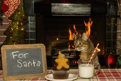 等待圣诞老人的一只逗人喜爱的猫 免版税图库摄影