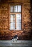 -等待在台阶的狗-黑白博德牧羊犬在伟大的窗口下 免版税图库摄影