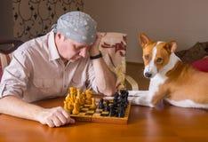 等待在棋家庭比赛的Basenji狗主要接下来的步骤 免版税库存照片