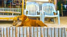 等待在海滩的狗所有者 库存图片