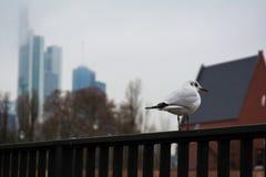 等待在路轨法兰克福地平线阴云密布天气的海鸥 免版税库存照片
