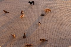 等待在边路的猫 免版税图库摄影