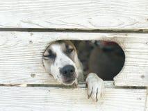 等待在门的狗 免版税库存图片